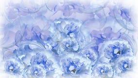 Blom- blått-vit-violett bakgrund Pioner för blåvita blommor blom- collage vita tulpan för blomma för bakgrundssammansättningsconv Royaltyfri Foto