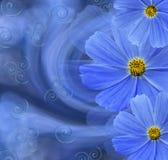Blom- blåvit härlig bakgrund vita tulpan för blomma för bakgrundssammansättningsconvolvulus Vykort med blåa blommor av tusensköno Royaltyfria Bilder