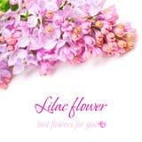 blom- blommalila för bakgrund Royaltyfria Bilder