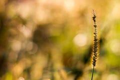 Blom- bokeh med gräs Royaltyfri Fotografi
