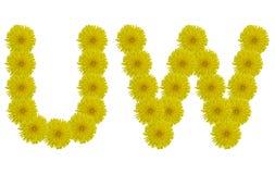 Blom- bokstäver U, W som isoleras på vit bakgrund Arkivbilder