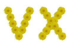 Blom- bokstäver V, X isolerat på vit bakgrund Arkivfoto
