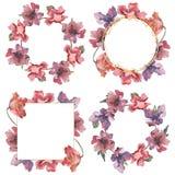 Blom- botaniska blommor f?r r?d och purpurf?rgad vallmo Upps?ttning f?r vattenf?rgbakgrundsillustration Fyrkant f?r ramgr?nsprydn vektor illustrationer