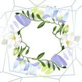 Blom- botaniska blommor f?r vit freesia Upps?ttning f?r vattenf?rgbakgrundsillustration Fyrkant f?r ramgr?nsprydnad stock illustrationer