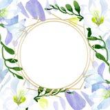 Blom- botaniska blommor f?r vit freesia Upps?ttning f?r vattenf?rgbakgrundsillustration Fyrkant f?r ramgr?nsprydnad royaltyfri illustrationer
