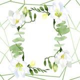 Blom- botaniska blommor f?r vit freesia Upps?ttning f?r vattenf?rgbakgrundsillustration Fyrkant f?r ramgr?nsprydnad vektor illustrationer