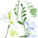 Blom- botaniska blommor f?r vit freesia Upps?ttning f?r vattenf?rgbakgrundsillustration Isolerad freesiaillustrationbest?ndsdel vektor illustrationer
