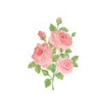 Blom- bukett som isoleras över vit bakgrund Rosa liten bukett för blomma Arkivbild