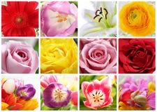 blom- collage Arkivbild