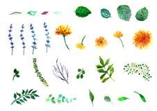 blom- dekorativa element många ställde in Samling med sidor Vår eller sommardesign för inbjudan Royaltyfri Foto