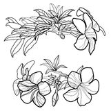 blom- designelement Arkivfoton