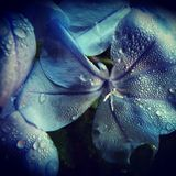Blom- duschar Royaltyfri Foto