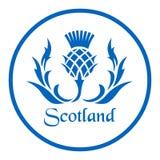 Blom- emblem av Skottland, tisteln Royaltyfri Foto