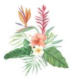 Blom- fågel för vattenfärg av hibiskusen för Plumeria för sidor för paradisblommor den tropiska Royaltyfri Fotografi