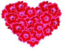 Blom- förälskelsekort Fotografering för Bildbyråer