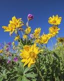 Blom för högt berg Royaltyfri Fotografi