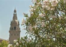 Blom för sommar för astle för  för naturblommor Ñ Royaltyfria Foton