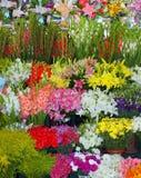 blom- försäljning arkivfoto