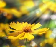 blom- ferie för bakgrund Royaltyfri Foto
