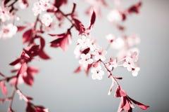 blom- fjäder för abstrakt bakgrund Arkivbilder
