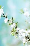 blom- fjäder för abstrakt bakgrund Royaltyfria Bilder