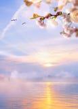 blom- fjäder för abstrakt bakgrund Royaltyfri Foto