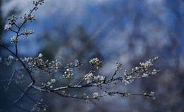 blom- fjäder för abstrakt konstbakgrundsdesign Vårgränsbakgrund med den vita blomningen Arkivbild