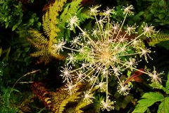 blom- flake arkivbilder