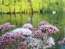 Blom- fred arkivbild