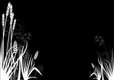 blom- garnering 08 vektor illustrationer