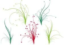 blom- gräs