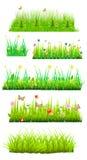 Blom- gräs royaltyfri illustrationer
