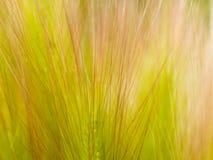 blom- gräs för bakgrund Royaltyfri Fotografi