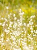 Blom- gräs för sommar fotografering för bildbyråer