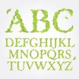 Blom- gräsplan lämnar abcvektorillustrationen Royaltyfri Foto