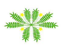 blom- grön modell Royaltyfri Bild