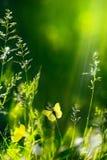 Blom- grön naturbakgrund för abstrakt sommar Royaltyfri Fotografi