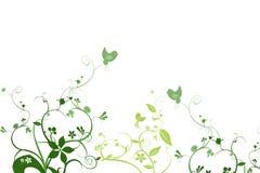 blom- green för fåglar Arkivbilder