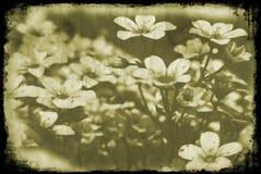blom- grunge Royaltyfria Foton