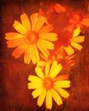 blom- grunge för abstrakt bakgrund Royaltyfri Fotografi