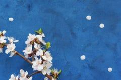blom- grunge för bakgrund Royaltyfria Foton