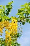 blom- guld- Royaltyfria Foton