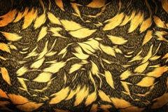 blom- guld- för bakgrund Arkivfoto