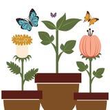 blom- härlig design Royaltyfri Fotografi