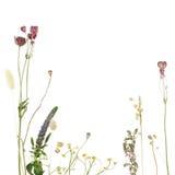blom- härlig kant Arkivbild