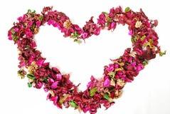 blom- hjärta Arkivbild