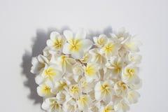 Blom- hjärta för somrar med blommor Royaltyfri Bild