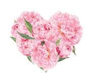 Blom- hjärta - rosa pionblommor Vattenfärg för valentindag som gifta sig Royaltyfri Bild