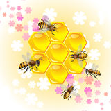 blom- honung för bakgrund Royaltyfria Bilder