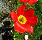 Blom- i trädgården arkivfoton
